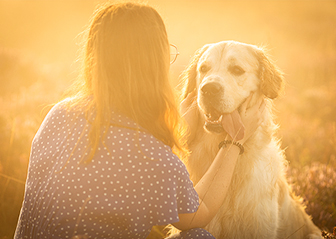 photographe canin chien golden retriever bruyère brest